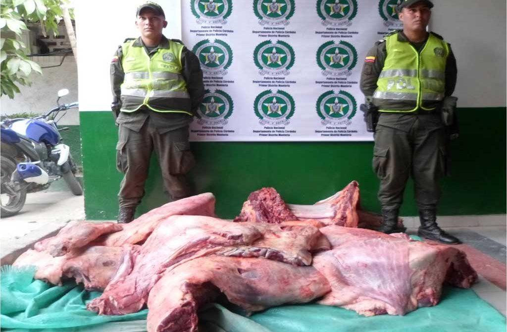 Este operativo se llevó a cabo en un matadero clandestino en un corregimiento cerca de la ciudad de Montería