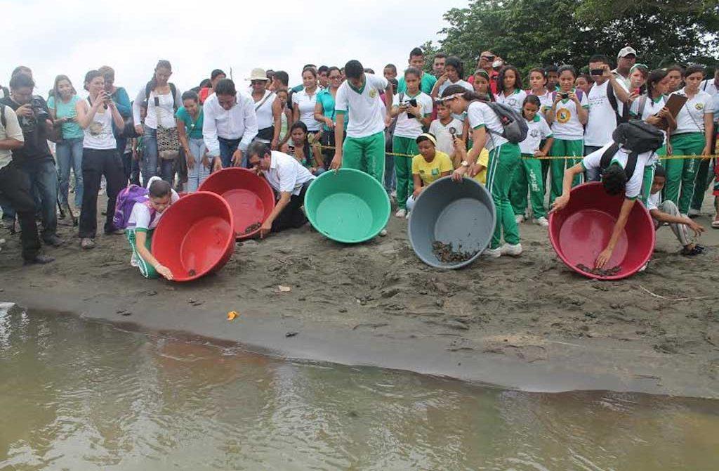 721 Tortugas de Rio, fueron devueltas a su habita natural, por la CAR – CVS.