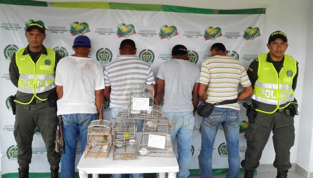Capturados cuando intentaban comercializar canarios en vía de extinción