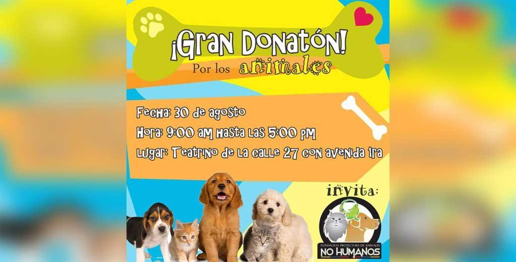 Gran Donatón por los animales desamparados en Montería