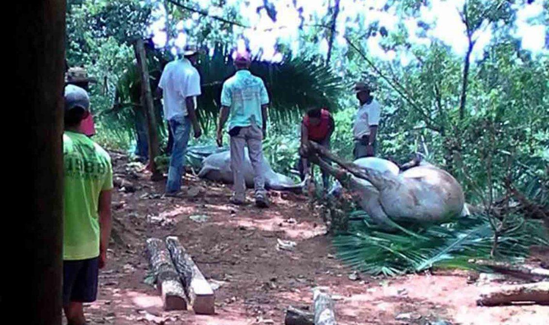 En san José de Uré: campesino fue impactado por un rayo; milagrosamente sobrevivió