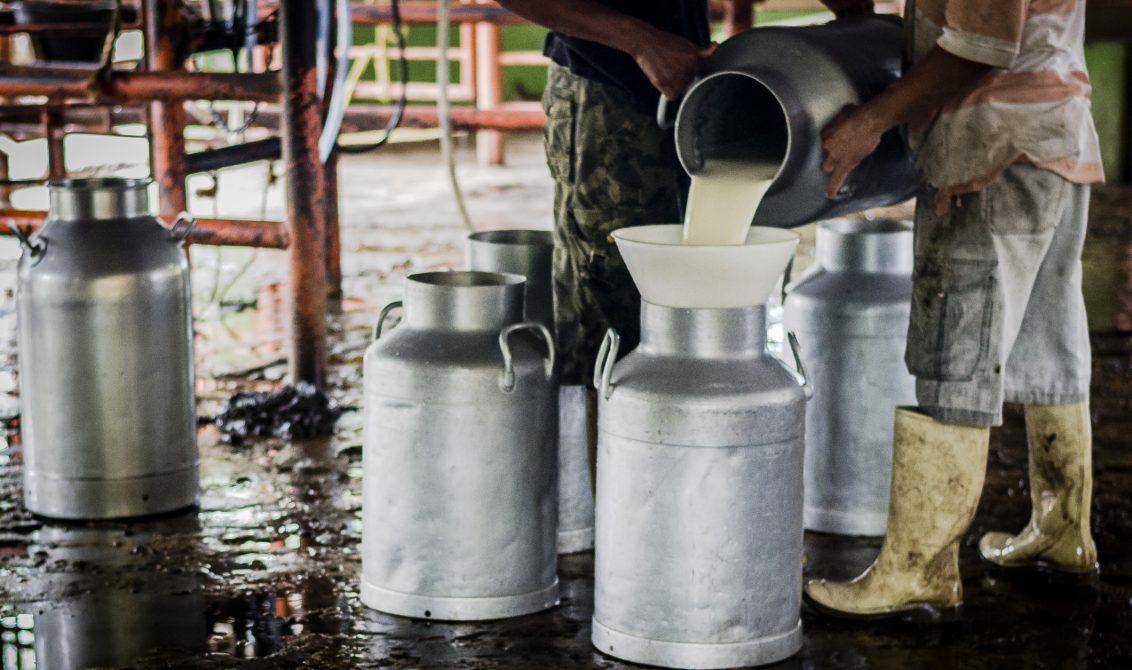MinAgricultura aumentó en 8.3 % el precio base que se paga al productor de leche