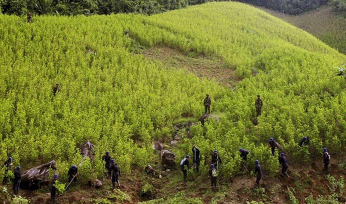 En 2016 aumentaron 52 % los cultivos ilícitos en Colombia: ONU