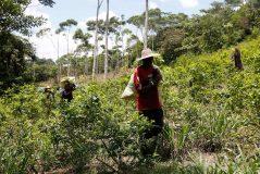 plantacion-de-coca-en-colombia_1-239x160.jpg