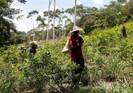 plantacion-de-coca-en-colombia_1-444x311.jpg