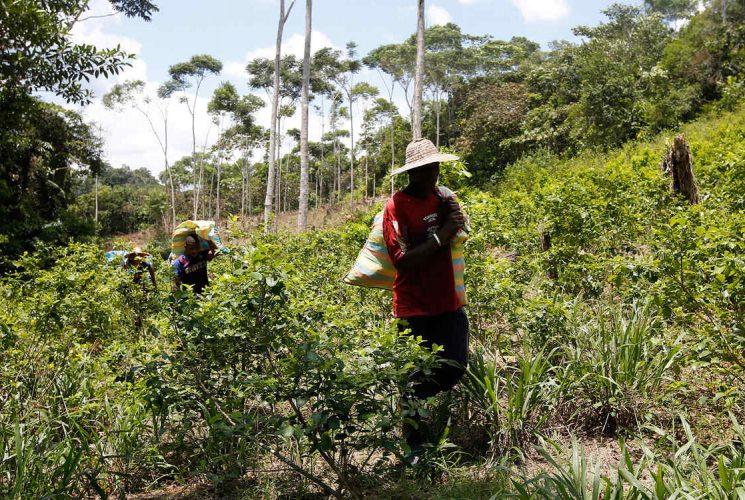plantacion-de-coca-en-colombia_1-745x500.jpg