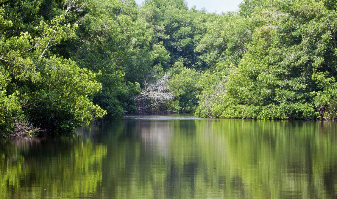 cvs insta a implementar medidas que aceleren conservaci u00f3n de biodiversidad en c u00f3rdoba  u2013 larazon co