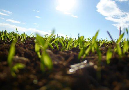 grass-1148913_1920-444x311.jpg