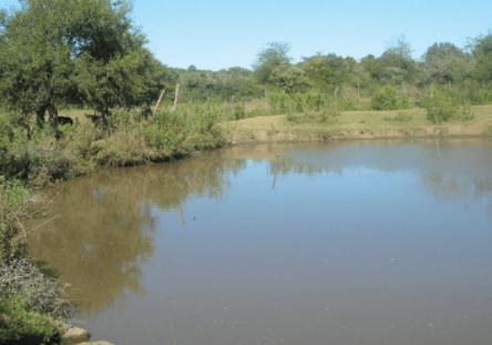represa-ahogado-444x311.png