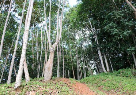 Bosque-deforestado-444x311.jpg