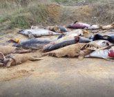 delfines-muertos-165x140.jpg
