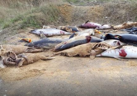 delfines-muertos-444x311.jpg