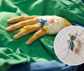dengue-165x140.jpg