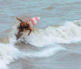 surf-san-bernardo-del-viento-1-165x140.jpeg