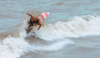 surf-san-bernardo-del-viento-1-342x200.jpeg
