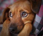 dog-3071334_1280-165x140.jpg