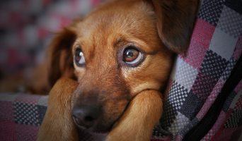 dog-3071334_1280-342x200.jpg