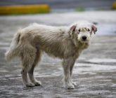 perro-callejero-165x140.jpg