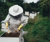 apiary-1866740_1280-165x140.jpg