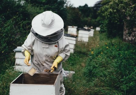 apiary-1866740_1280-444x311.jpg
