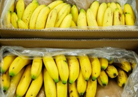cultivos-de-banano-444x311.jpg