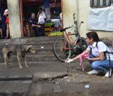 protección-animal-monteria-6-165x140.jpeg