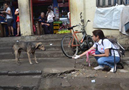 protección-animal-monteria-6-444x311.jpeg