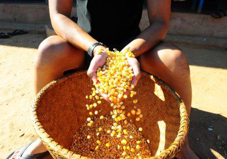 corn-1768078_1920-444x311.jpg