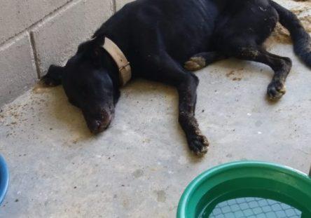 perro-herido-444x311.jpg