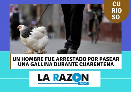 Hombre-arrestado-por-pasear-gallina-444x311.png