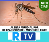 Mosquito-tigre-165x140.png
