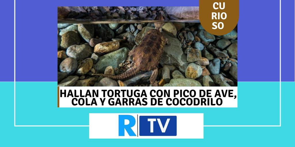 Hallan tortuga con pico de ave, cola y garras de cocodrilo