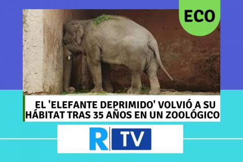 EL 'ELEFANTE DEPRIMIDO' VOLVIÓ A SU HÁBITAT TRAS 35 AÑOS EN UN ZOOLÓGICO