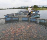 Pescado-1-165x140.jpeg